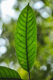 Close up black line in green leaf Stock Photos