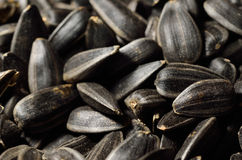 Close-up of black oil sunflower seeds Royalty Free Stock Images