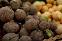 Close up of black radish at grocery or market Royalty Free Stock Photography