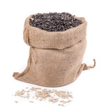 Close up of black sunflower seeds Stock Photo