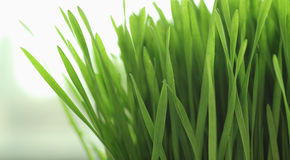 Close up of Blades of Grass Stock Photo
