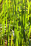 Close-up of blades of grass against the light Stock Photography