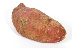 Close up of Blemishes on Sweet Potato Skin. Studio shot Isolated single healthy sweet potato with blemished rough skin on white Stock Images