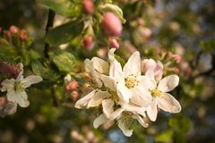Close up Blossom Stock Photography