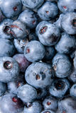 Close-up of blue berry fruit in a group. Stock Images