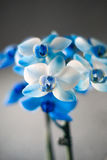Close up of a blue colored orchid royalty free stock photos