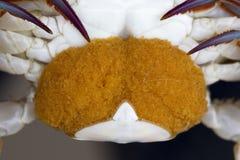 Close up of Blue crab, Blue swimmer crab Portunus pelagicus wi. Th orange crab eggs royalty free stock photography