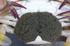 Close up of Blue crab, Blue swimmer crab Portunus pelagicus wi. Th black crab eggs royalty free stock photo