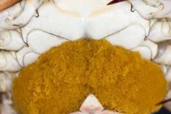 Close up of Blue crab, Blue swimmer crab Portunus pelagicus wi. Th orange crab eggs stock image