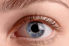 Close up blue eye. Macro shot. Oculist care concept Stock Photos