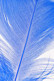 Close-up of a blue feather. Stock Photo