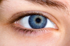 Close up of blue female eye Stock Image
