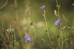 Close-up on blue flowers blurred bokeh background Royalty Free Stock Image
