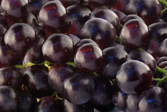 Close Up of Blue Grapes Stock Images