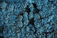Close up on blue lichen. Close up on blue lichen growing on a dark stone surface Royalty Free Stock Photos
