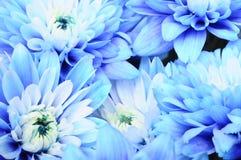 Close up of blue petals, Royalty Free Stock Photos