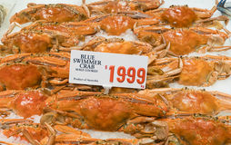 Close-up of blue swimmer crabs Stock Images