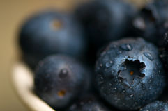 Close-up of Blueberries. Close-up of ripe blueberries sprinkled with water royalty free stock photography
