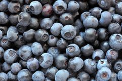 Close up on blueberries in bulk. Fresh berries close up in bulk royalty free stock photography