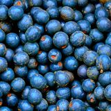 Close up of blueberries stock photography