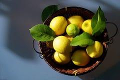 Still life with lemons stock photos