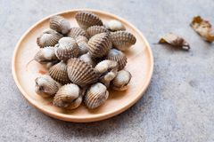 Close up boiled cockles. Fresh raw cockle shell sea food on wood dish Stock Image