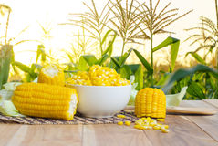 Close up boiled corn on wood table royalty free stock photo