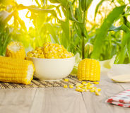 Close up boiled corn on wood table. Boiled corn on wood table over blurred corn field Royalty Free Stock Image