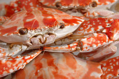 Close up of boiled crab Stock Images