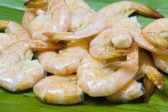 Close up boiled shrimp Stock Image