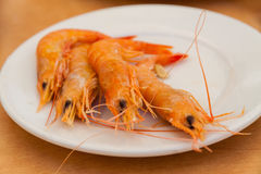 Close up of boiled shrimps Stock Photos