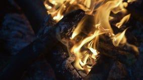 Close up of bonfire burning at night stock video