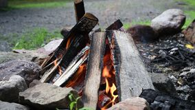 Bonfire flames of camping fire, burning firewood. Beautiful campfire outdoors. Close-up bonfire flames of camping fire, burning firewood. Beautiful campfire stock video