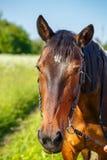 Close-up bonito da cabeça de cavalo no fundo natural foto de stock