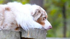 Close up bonito do cão filme