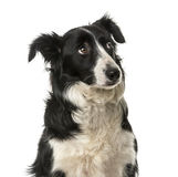 Close-up of a Border Collie Stock Photos