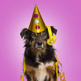 Close-up of a Border collie with party hat and streamers facing Stock Photos