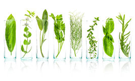 Close Up bottles of essential oils with fresh herbs . Sage, rose. Mary, sweet basil leaves ,lemon thyme ,parsley and peppermint branch isolated on white stock photo