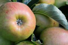 Close-up of the bottom of a red and green apple Royalty Free Stock Images
