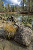 Close up of boulder and grass in water. Stock Photography