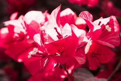 Flowery shades of Red Royalty Free Stock Photography