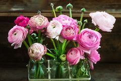Bouquet of Pink Ranunculus Buttercup Flowers Royalty Free Stock Photography