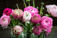Bouquet of Pink Ranunculus Buttercup Flowers Stock Photography