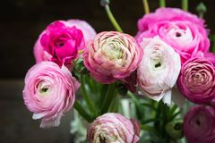 Bouquet of Pink Ranunculus Buttercup Flowers Royalty Free Stock Photos