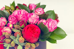 Close up of bouquet of pink and red roses on white back stock photography