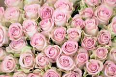 Close-up of a bouquet of pink roses Royalty Free Stock Photo