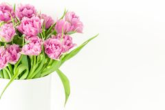 Close up bouquet of pink tulips in bucket. Fresh spring easter flower. White background , copy space Royalty Free Stock Photo