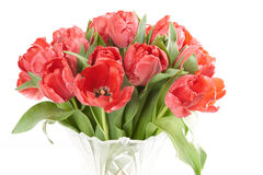 Close up of bouquet of red fresh tulips flowers after rain. Stock Photo