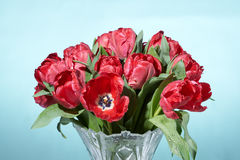 Close up of bouquet of red fresh tulips with water splashes in vase. Stock Photo