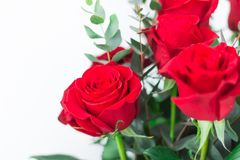 Close-up. A bouquet of red roses on a white background. A gift for a loved one royalty free stock photo